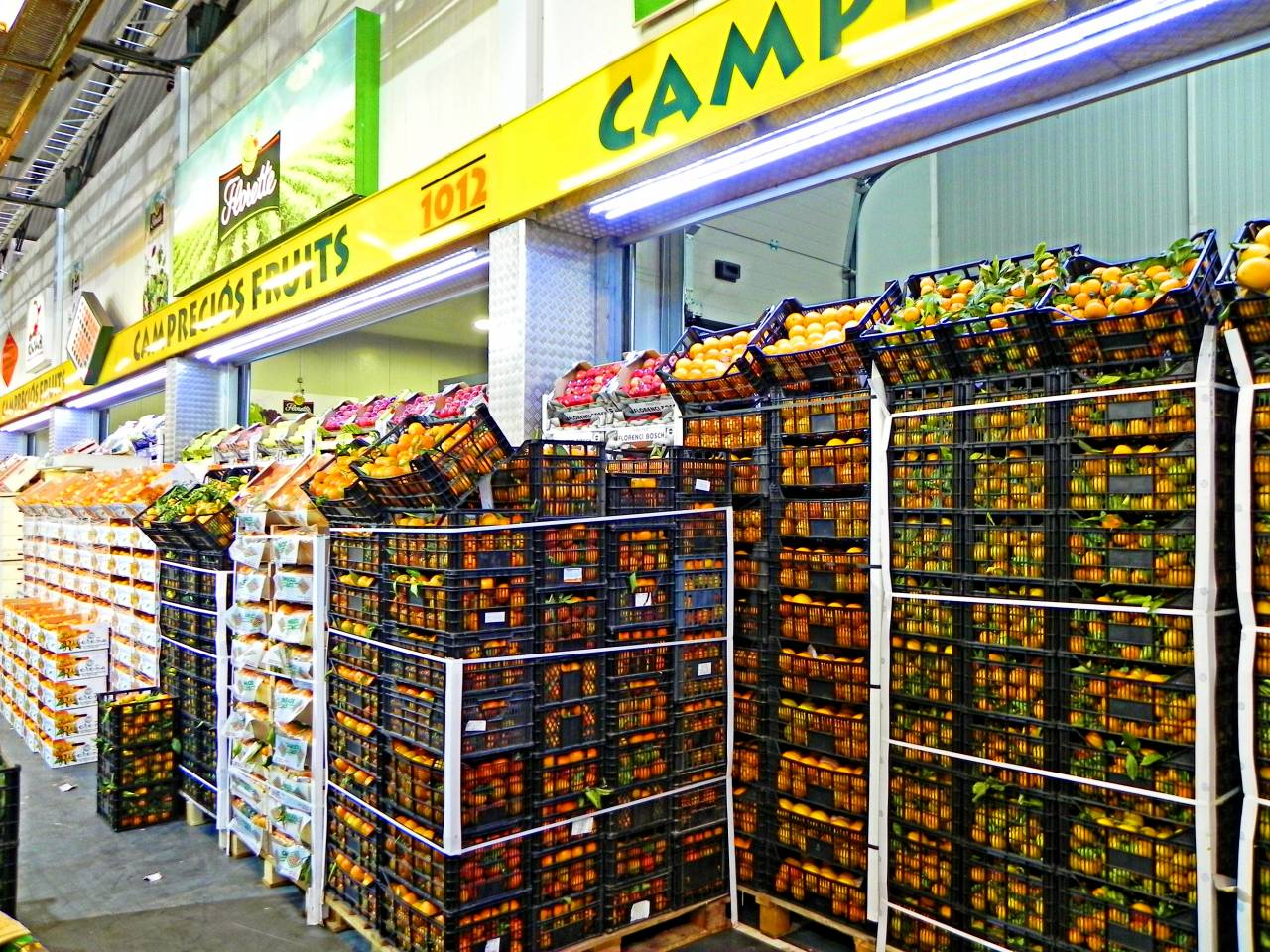 Camprecios Fruits - Historia