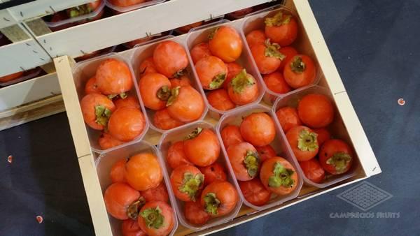 Camprecios Fruits - Productos-2