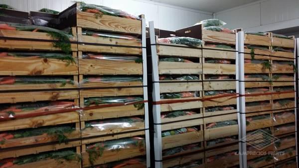 Camprecios Fruits - Productos-3