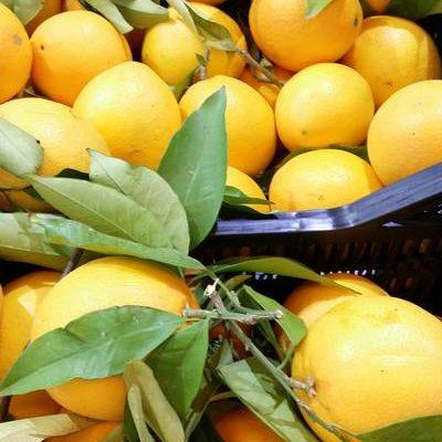 Camprecios Fruits - Productos de galeria