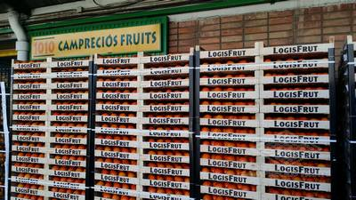 Camprecios Fruits - Productos de galeria